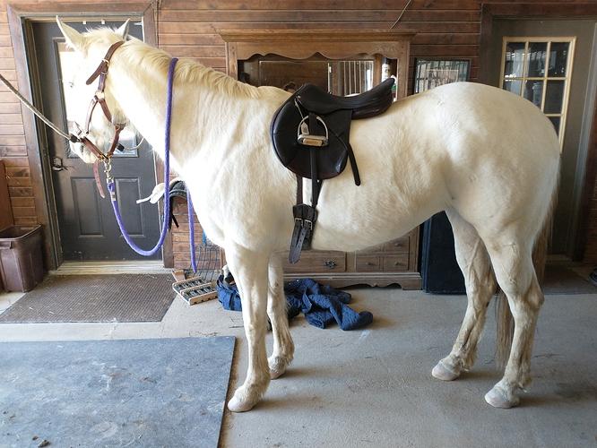 saddlefit2