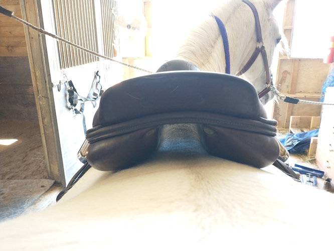 saddle fit 1