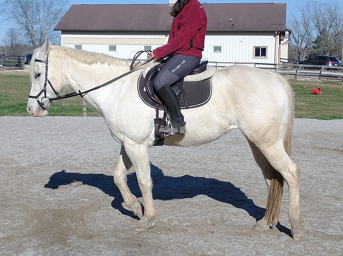 saddle pic