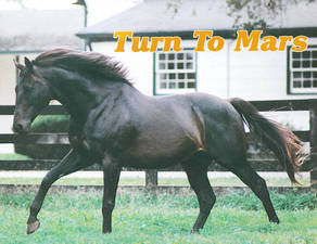 Horse_Turn_To_Mars-_2